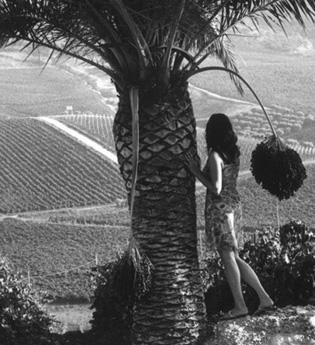 Rapitala': passione per il vino in un lembo di terra siciliana