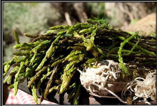In bici pedalando alla ricerca dell'asparago istriano