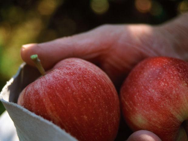 Le mele Gala della Val Venosta