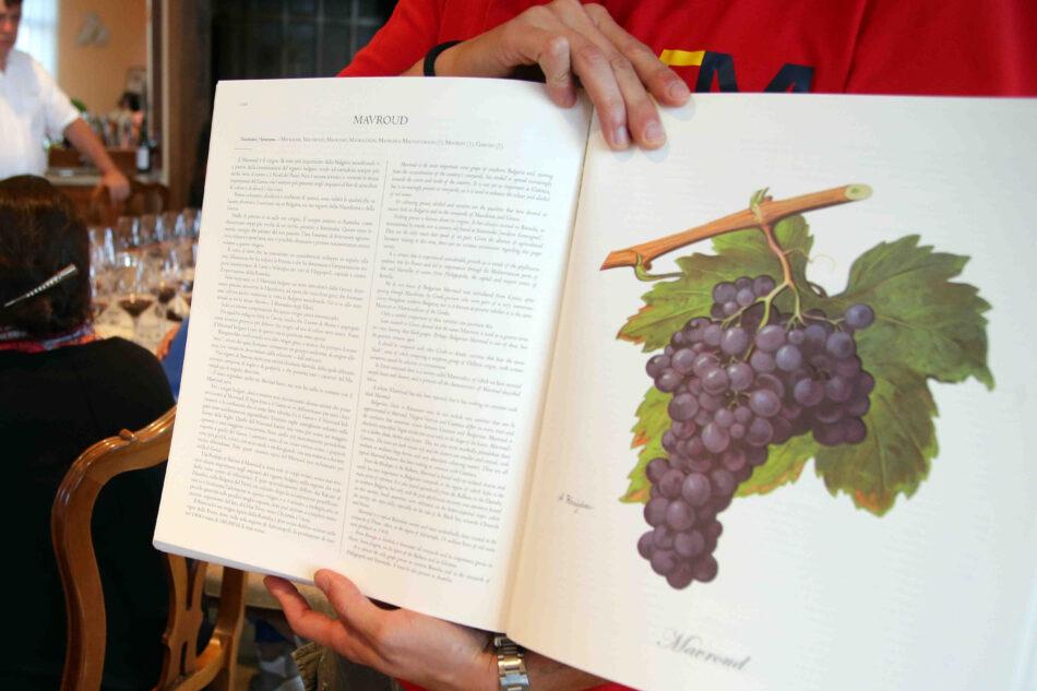 Bulgaria Red Wine Mavrud: una chicca tra i vecchi vini della Tracia