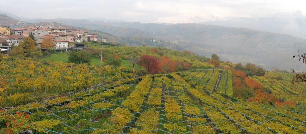 """Gli americani scelgono l'Amarone della Valpolicella perchè è italiano, è """"classico"""" e versatile"""