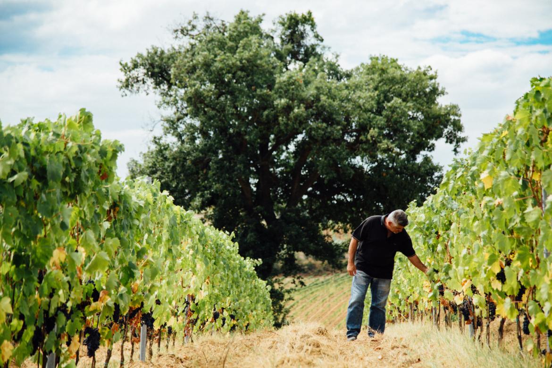 Vermentino Challenge 2017, la kermesse vinicola a Borgo Magliano Resort