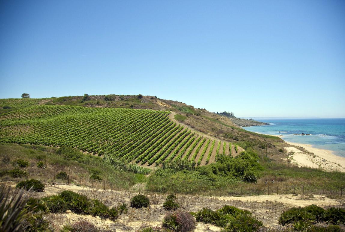 Mandrarossa e i suoi vini espressioni del territorio di Menfi