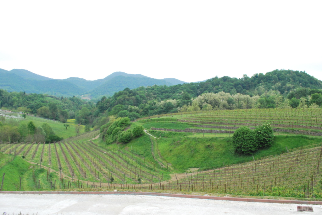 Il consorzio Vini Asolo Montello presenta  in regione la richiesta di blocco delle rivendiche