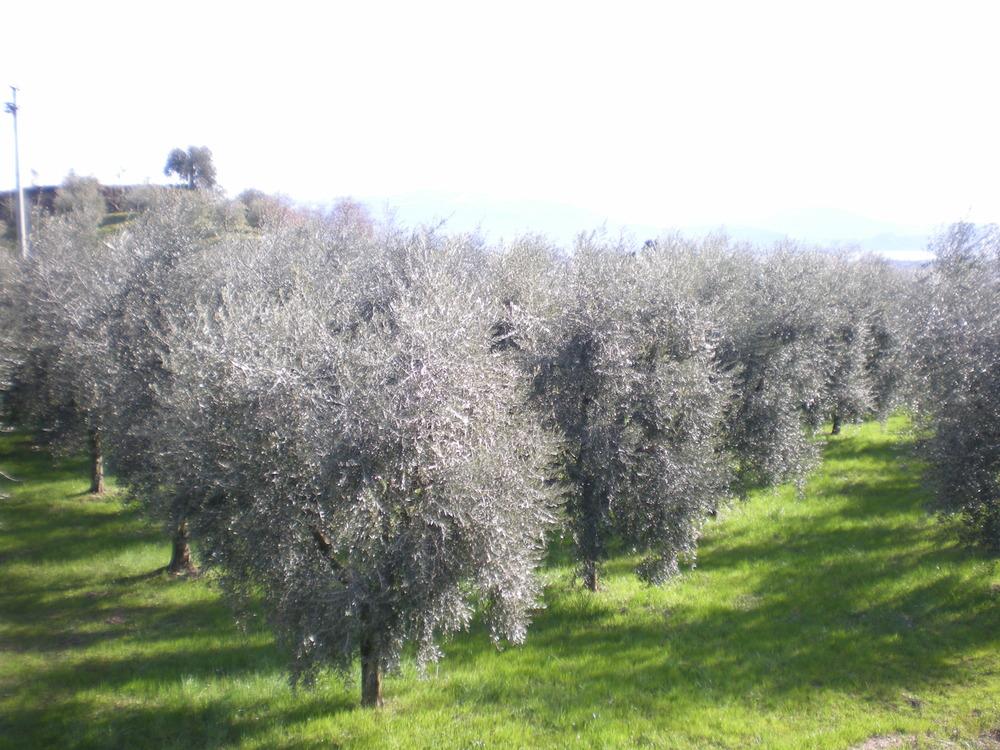Slow Food Veneto presenta la guida agli extravergine d'oliva 2019