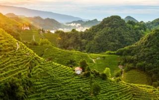 Le colline del Prosecco di Conegliano e Valdobbiadene sono Patrimonio dell'Umanità Unesco