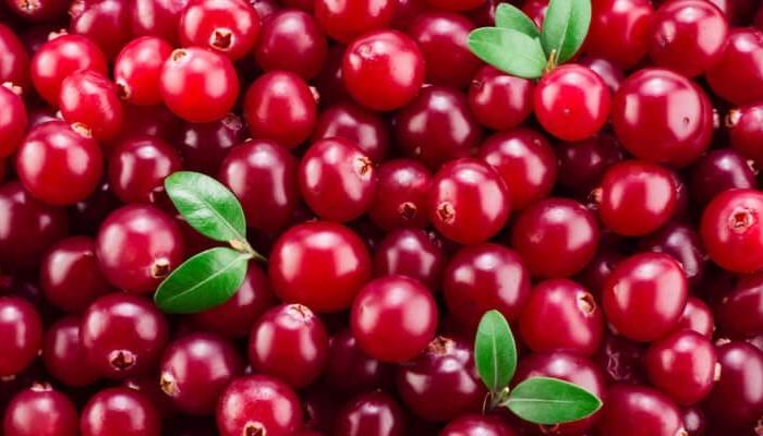Cranberry: tutte le proprietà del mirtillo rosso americano