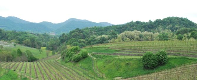 Metodo Asolo Montello: buone pratiche per una viticoltura responsabile e sostenibile