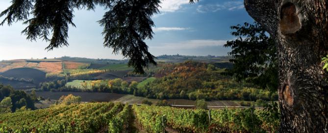 Chardonnay Bricco dei Guazzi, espressione piemontese della nota varietà