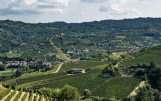Milano Wine Week: Piemonte protagonista