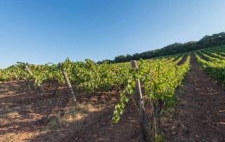 Dalla Toscana al Sol Levante: i vini Bulichella sulla via del mercato Asiatico
