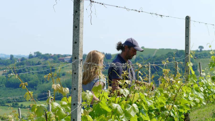La semplicità produce grandi vini  Pinsoglio