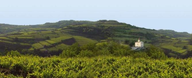 Doc Gambellara: al via un progetto triennale per la viticoltura sostenibile