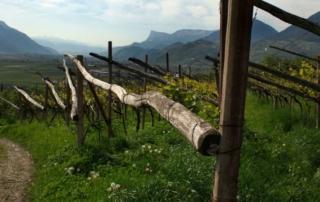 Vignaioli di Montagna a Bologna: tutti insieme appassionatamente