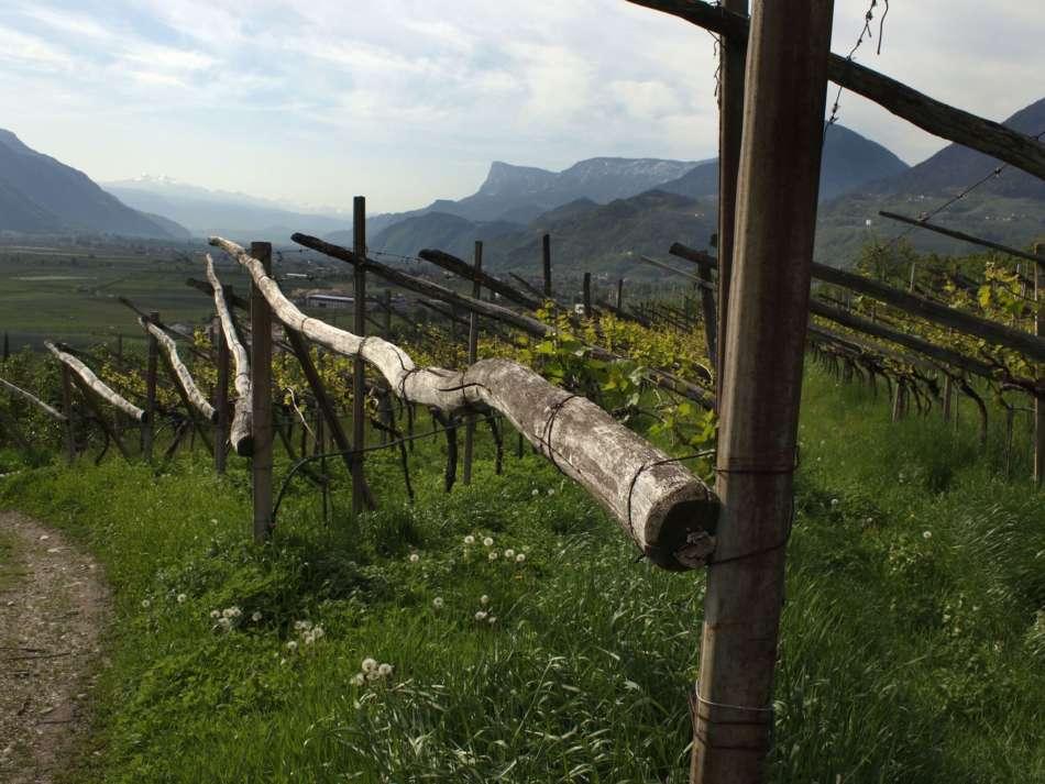 Vignaioli di Montagna