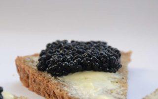 Agroittica: scopri il caviale sostenibile amato in tutto il mondo