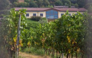 Monte Zovo, esperienze oltre il vino: al via degustazioni uniche e visite da vivere appieno