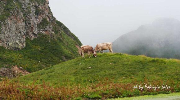 Un grande della montagna: il BETTELMATT