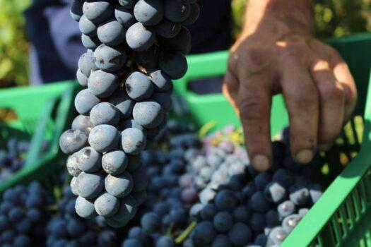 Vendemmia lunga e per single vineyards, Monte Zovo punta sulla valorizzazione dei terroir