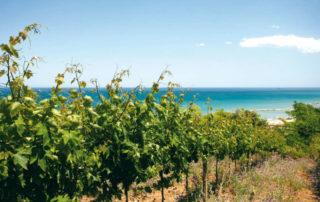 Cantina Tollo proclamata miglior cantina italiana a Mundus Vini