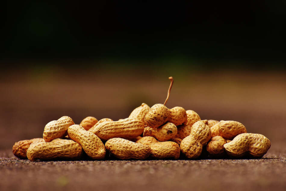 Nasce la filiera dell'arachide 100% italiana
