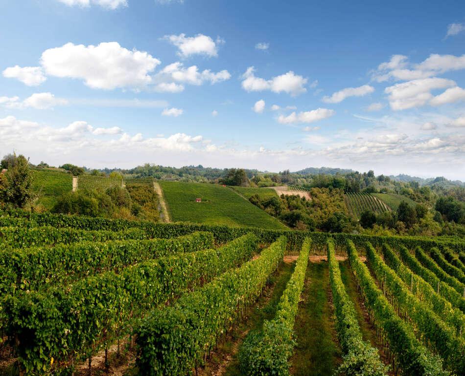 Quest'anno la Roero Wine Week 2020 si prefigge l'obiettivo di aiutare ristoratori e produttori, duramente colpiti negli ultimi mesi.