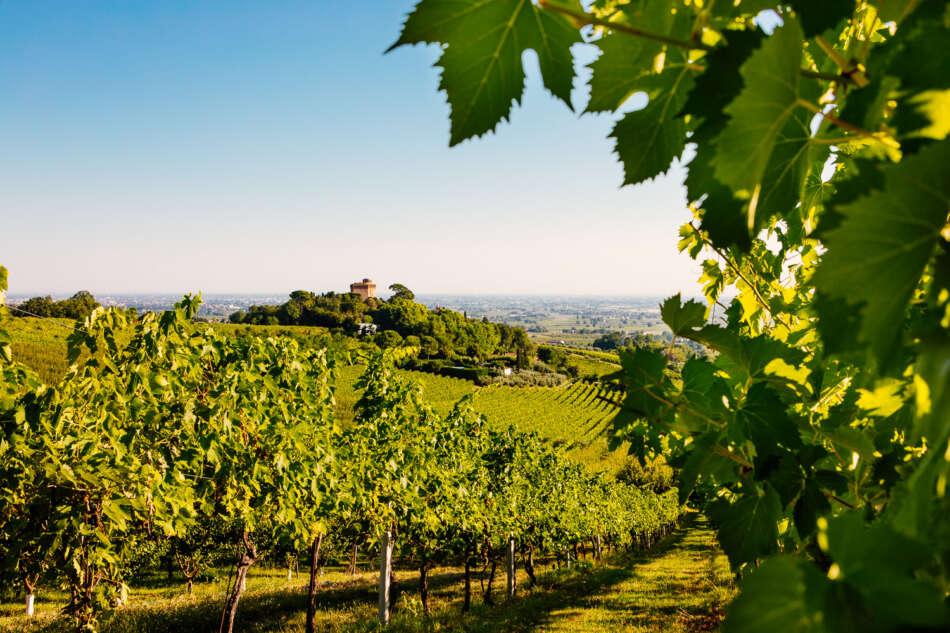 CAVIRO: i successi 2020 della cooperativa vitivinicola